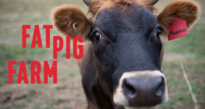 Fat Pig Farm, a graphic design logo and website design for Gourmet Farmer Matthew Evans